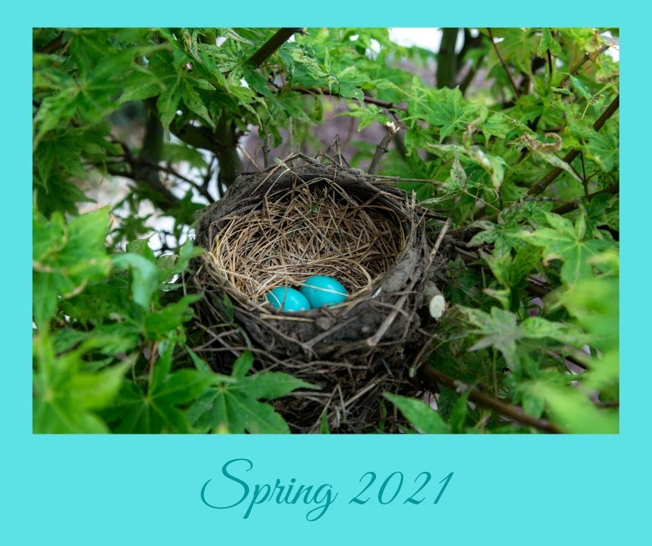 nest with 2 blue eggs Spring 2021 label