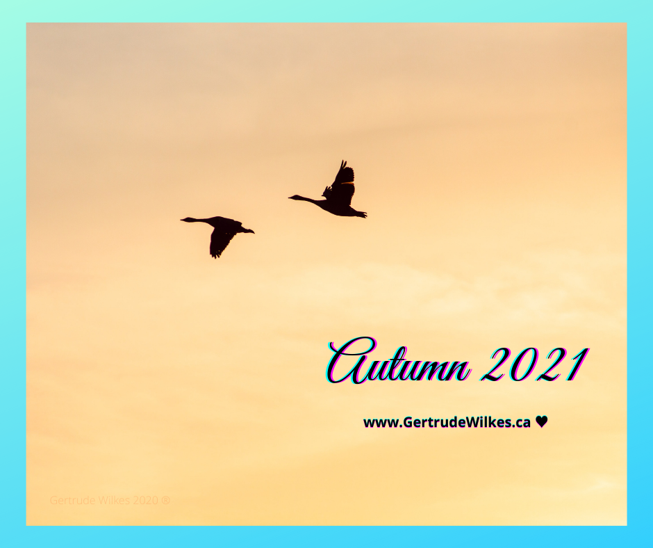 a pair of southward bound  Canada Geese  silhouetted against a golden sky. Cursive text on the lower right quadrant reads: Autumn 2021. Centered underneath in block text www.gertrudewilkes.com Photo by Jeffrey Hamilton